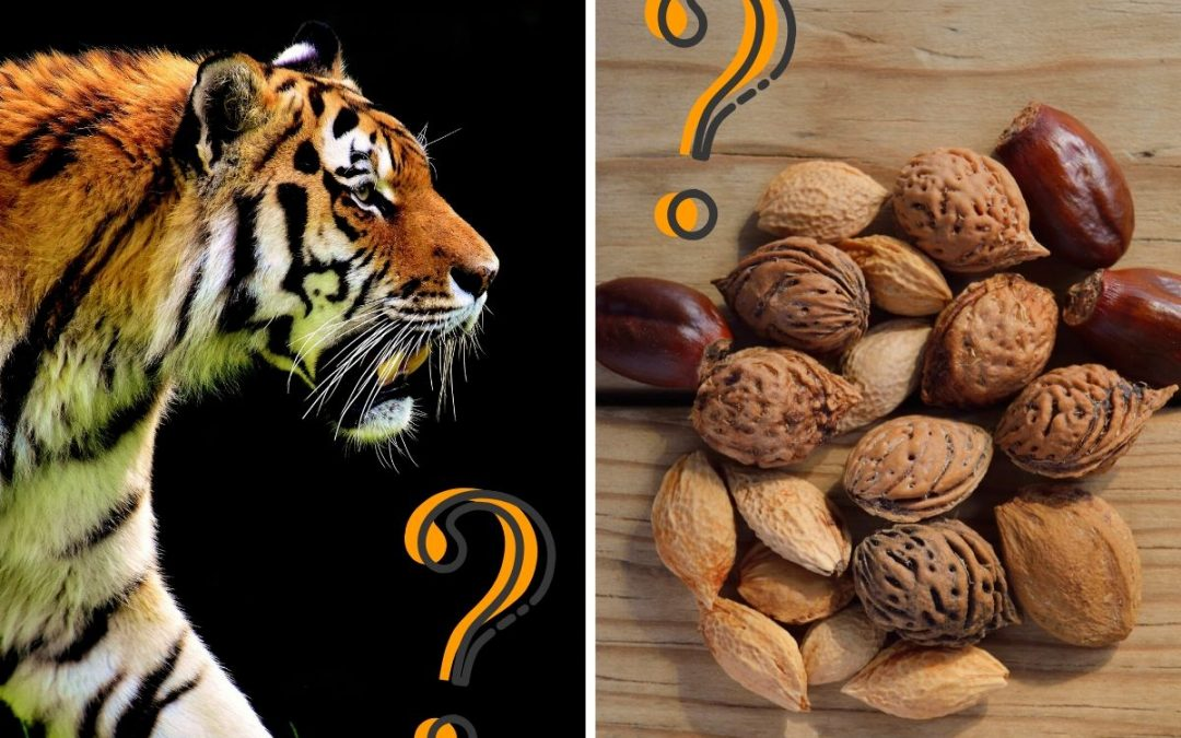 What are tiger nuts anyway?